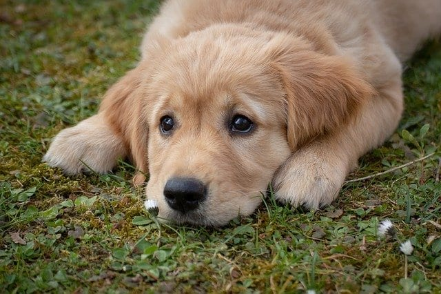 pet wellness plans in Happy valley, OR